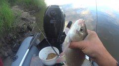 Нашёл клёвое место на леща и язя! Рыбалка на фидер.
