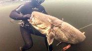 Подводная охота. Когда вместо судака наткнулся на сома в 32 килограмма