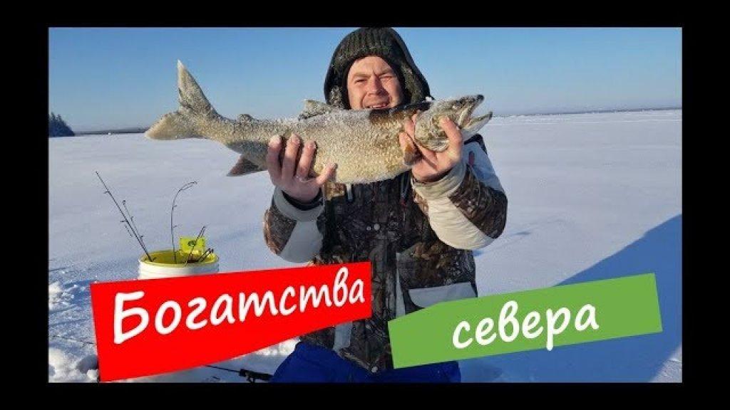 Уехали на 4 дня на рыбалку. День первый: -36С, большая рыба и первый опыт вождения на снегу.