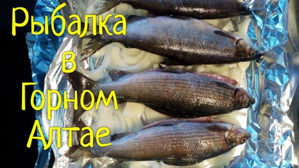 """Рыбалка в Горном Алтае или """"Заклинание Путина"""""""