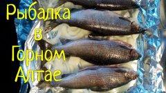 Рыбалка в Горном Алтае или