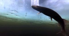 Как щуку в лунку заводить трудно... Подводная съемка процесса