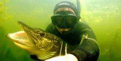 Подводная охота. Встреча со щукой на 15 килограмм... Браконьерство ли?