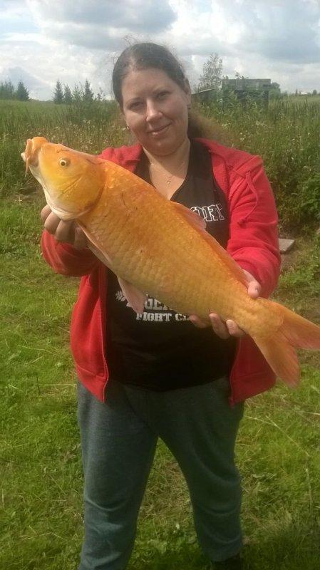 Золотая рыбка)