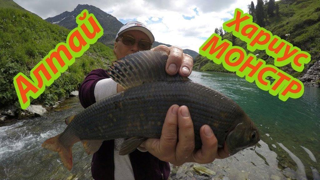 Крупный Хариус в Горном Алтае Улётная Рыбалка  Fishing