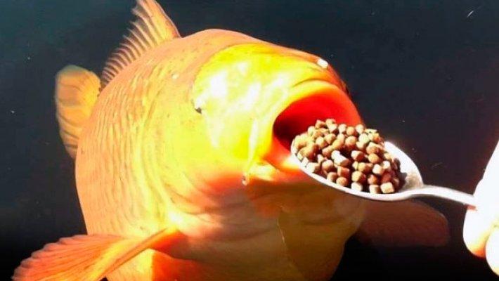 Конкурс DUNAEV - «Покормите рыбку»