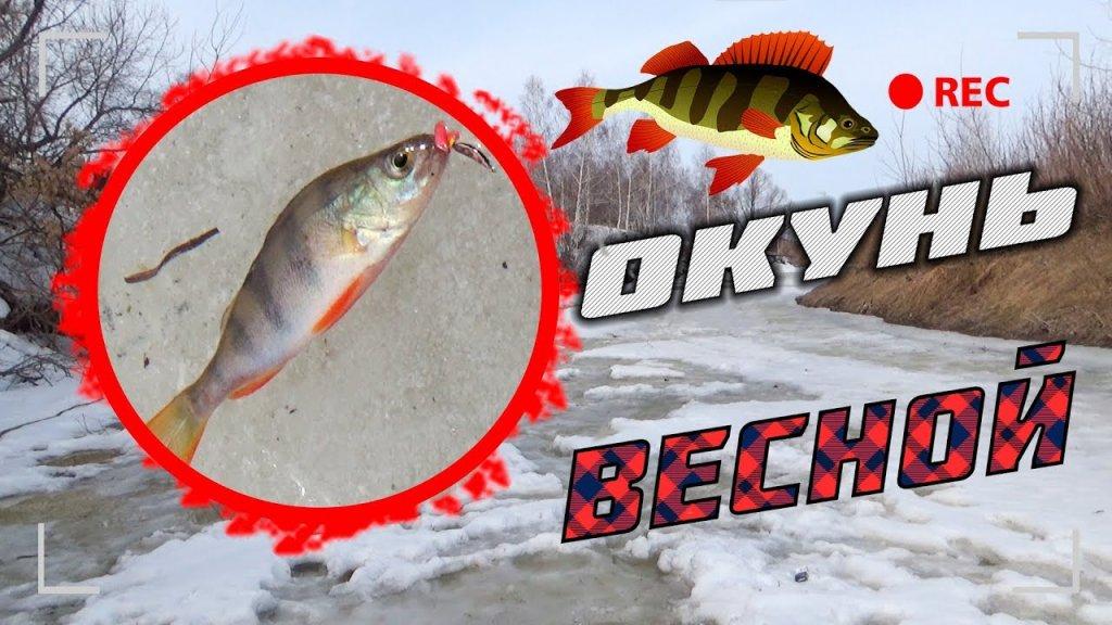 рыбалка на алтае ловля окуня на последнем льду