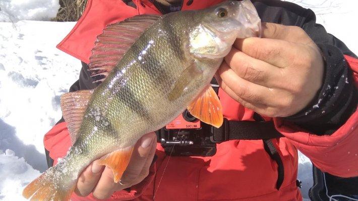 Крайняя рыбалка в Сузуне...