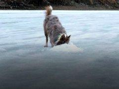 Собака, которая ищет окуней в лунках. Полезный друг рыбака