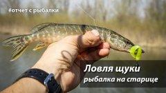 Рыбалка на старице. Ловля щуки на микроджиг