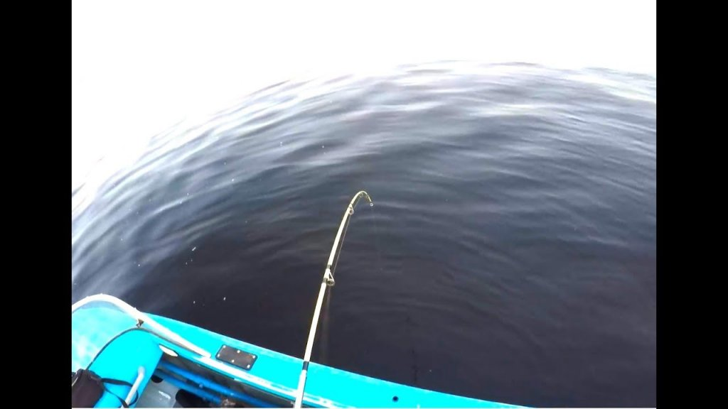 С квоком на сома. Первый сом сезона. Рыбалка