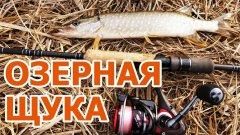 Озерная щука. Рыбалка на лайтовые снасти