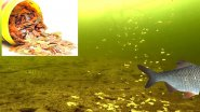 Реакция рыбы на хлопья для аквариумных рыбок. Подводная съемка
