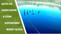 Щука на озере коряг.  В этом КОРЯЖНИКЕ живет щука.