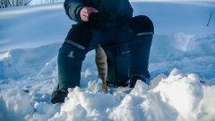 Зимняя рыбалка. Как ловить окуней в плохую погоду.