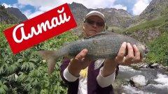 Рыбалка в Горном Алтае летом
