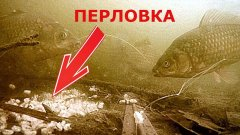 Карась и рак на перловку! Реакция рыбы. Подводная съемка