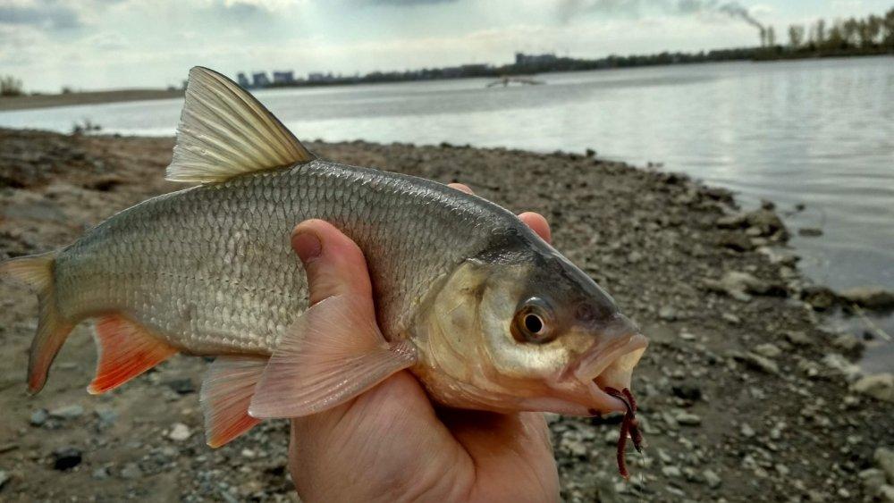 Рыбка с характером!