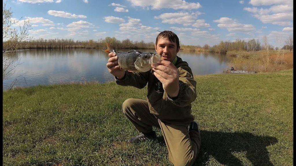 Рыбалка на спиннинг в запрет, окунь монстр