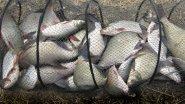 Как ловят промысловики рыбу зимой на Оби   Глухая Сибирь