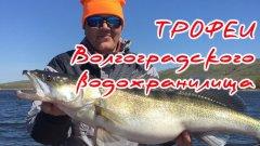 Весенний судак. Рыбалка 2019. Волгоградское водохранилище. Первые трофеи