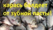 Ловля карася на зубную пасту | такого результата я не ожидал!!! | рыбалка в мае 2019