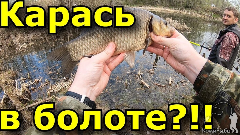 Карась в болоте?!?! Рыбалка 2019. Бешеный клев карася