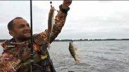 Бешенный клёв окуня в день открытия рыбалки. Отводной поводок - рулит