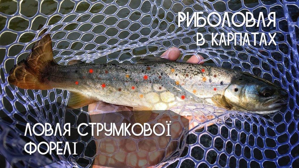 Рыбалка в Карпатах. Ловля форели