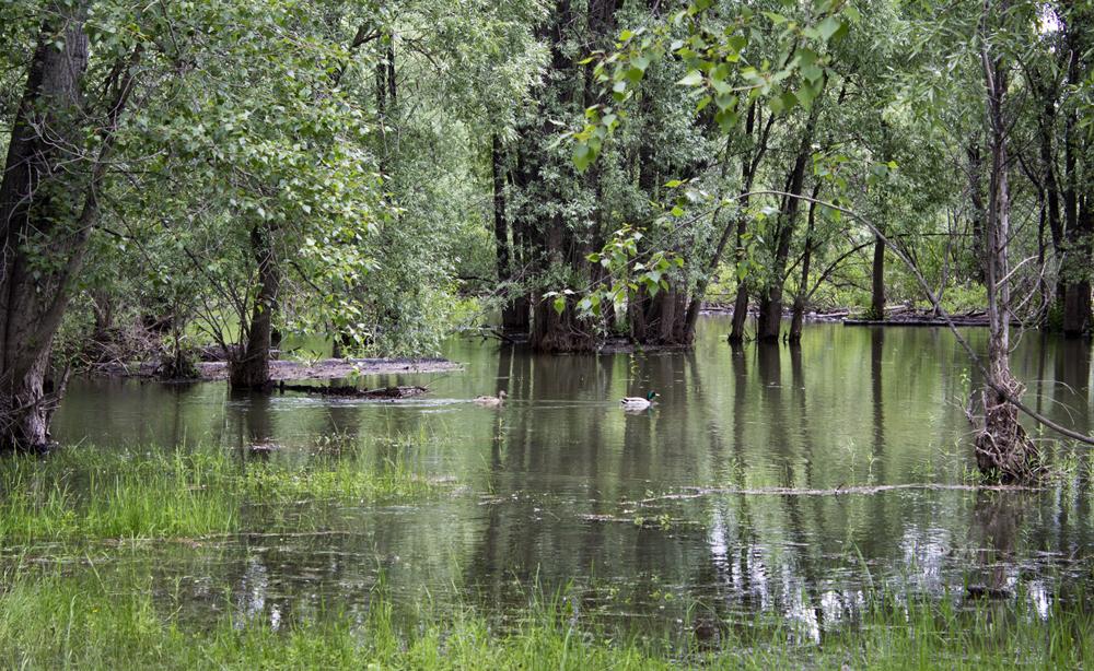 Под метромостом. Уровень воды 278 см.