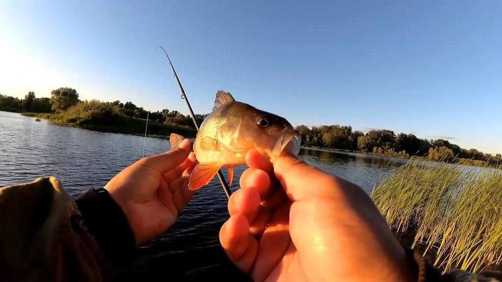 Окунь на отводной! Спокойная рыбалка вечером на озере, спиннинг