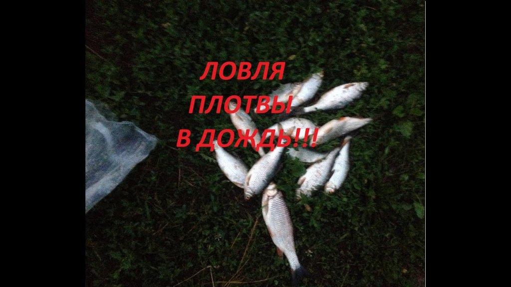 Нара 29.06.2019!!! Ловля плотвы в дождь!!!