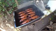 Копчение рыбы в домашних условиях.