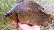 Рыбалка на крупного карася. Секреты ловли на поплавок
