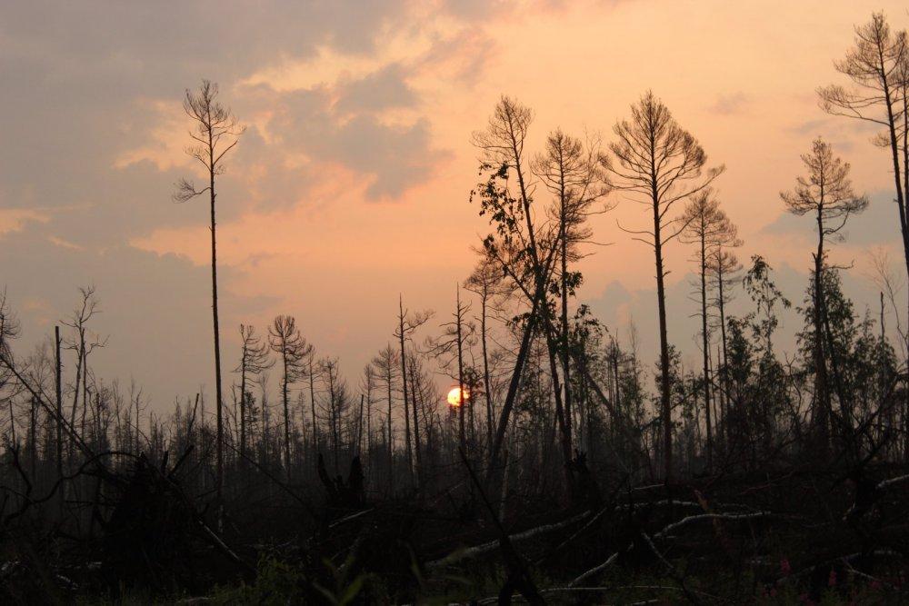 Восход над болотом