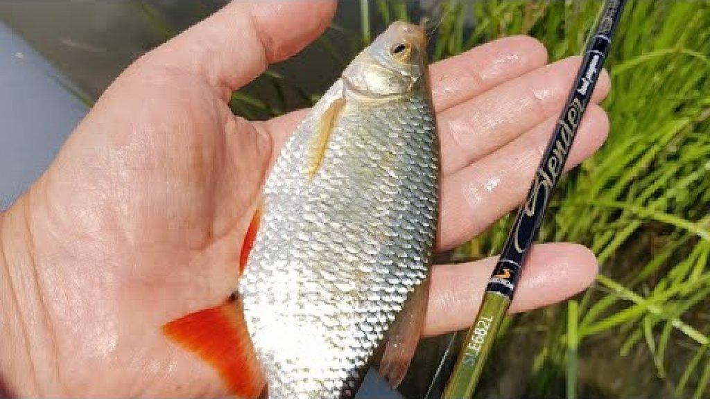 Азартная рыбалка. Ловля краснопёрки на спиннинг