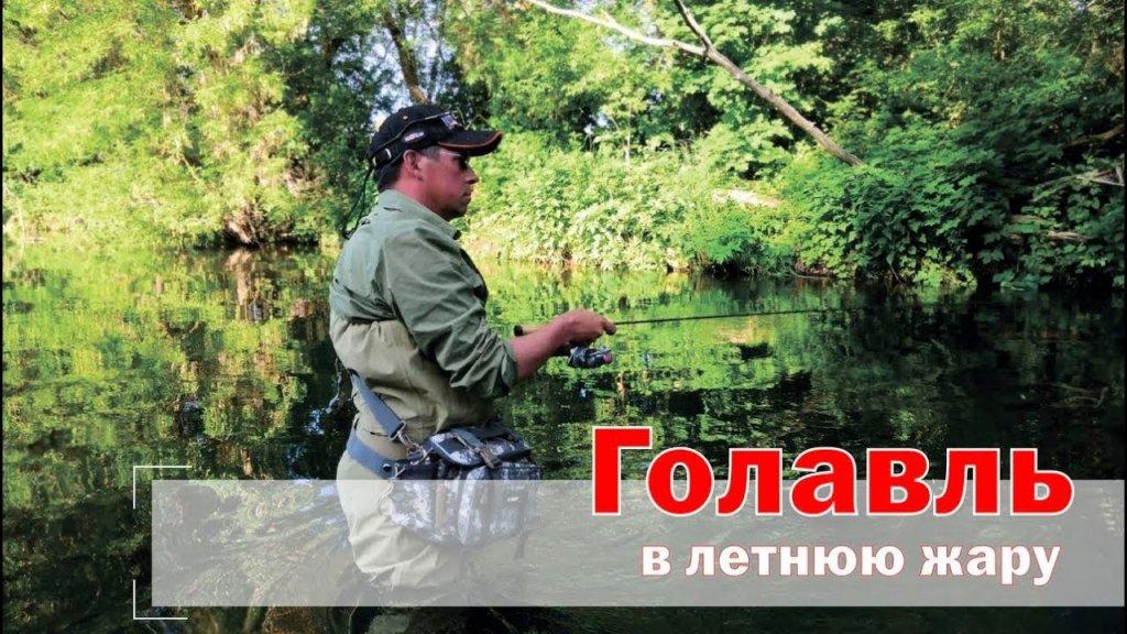 Голавль в летнюю жару. Рыбалка с Чемпионом