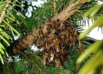 Правильные пчёлы)