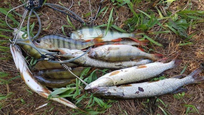Поиски рыбы на оз. Глубоком, июль 2019