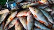 Монтаж скользящего отводного поводка для ловли окуня и судака
