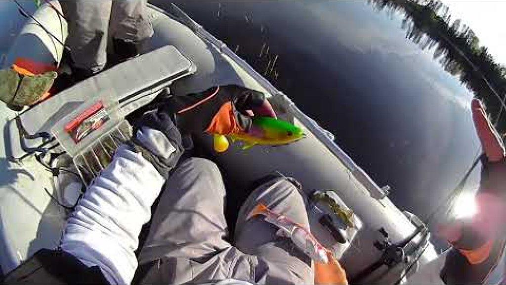 Обзор камеры Water Wolf HD. Уникальные щучьи съёмки под водой.