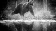 Внезапная встреча с огромным медведем на рыбалке! Что делать?