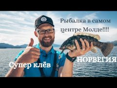 Рыбалка в самом центре Молде, Норвегия! Отличный клёв радужного губана!