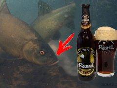 Рыба любит темное пиво! Подводная съемка. Линь, карась