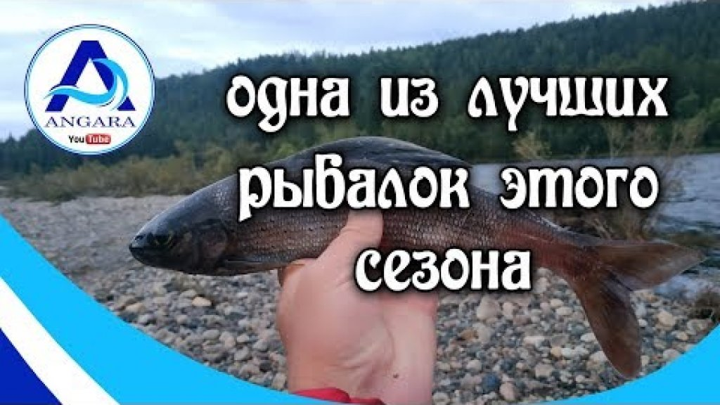 Крупный хариус. Одна из лучших рыбалок этого сезона.