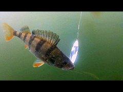 Неудачная рыбалка на спиннинг! Осень 2019! Подводная съемка