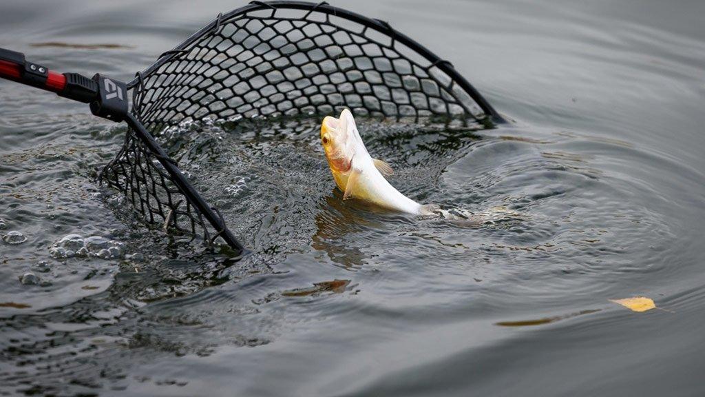 30 рыб за 20 минут! Новосибирский спортсмен-форелятник вышел в финал PAL Trout