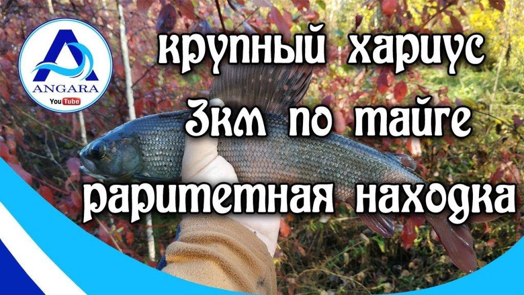 Рыбалка. Хариус. Идем три километра по тайге. Иркутск. Angara.