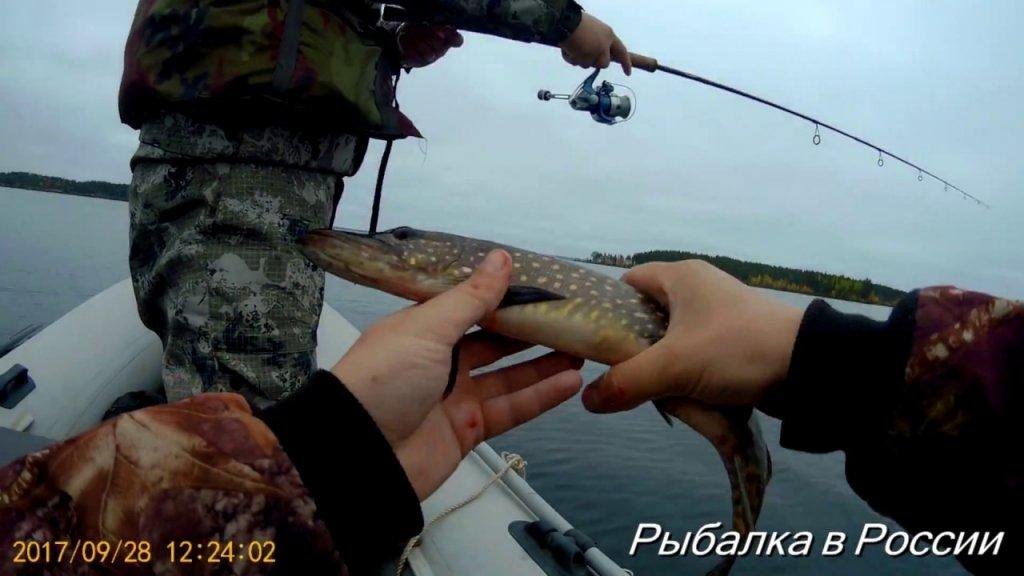 Рыбалка в Карелии . Ловля щуки на воблеры Rapala Shad Rap c Алиэкспресс