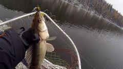 Рыбалка перед ледоставом. Чем соблазнить судака?